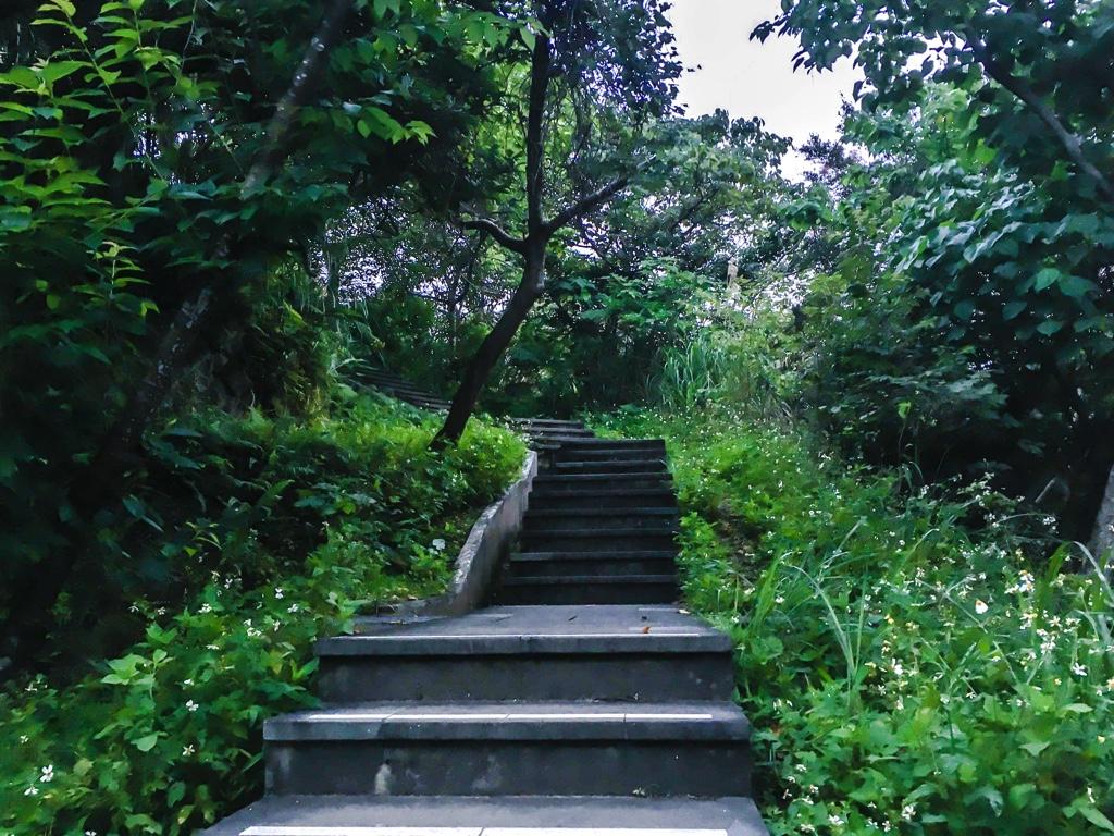 和美山の登山道