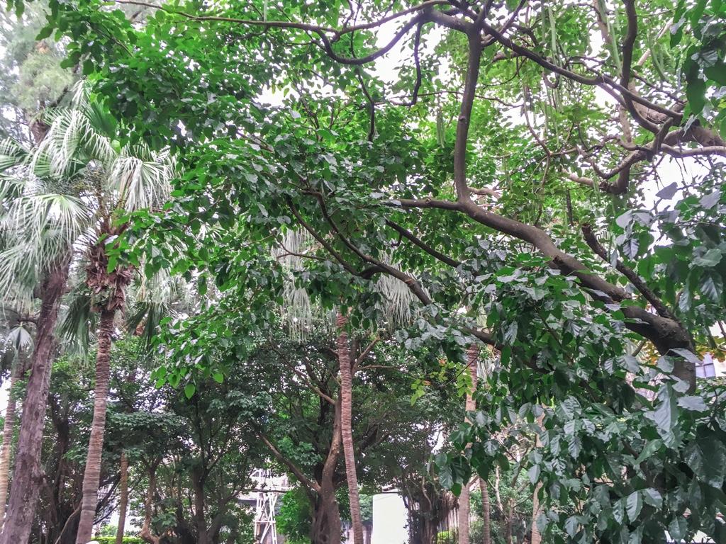 台北鉄道工場敷地内にある植物