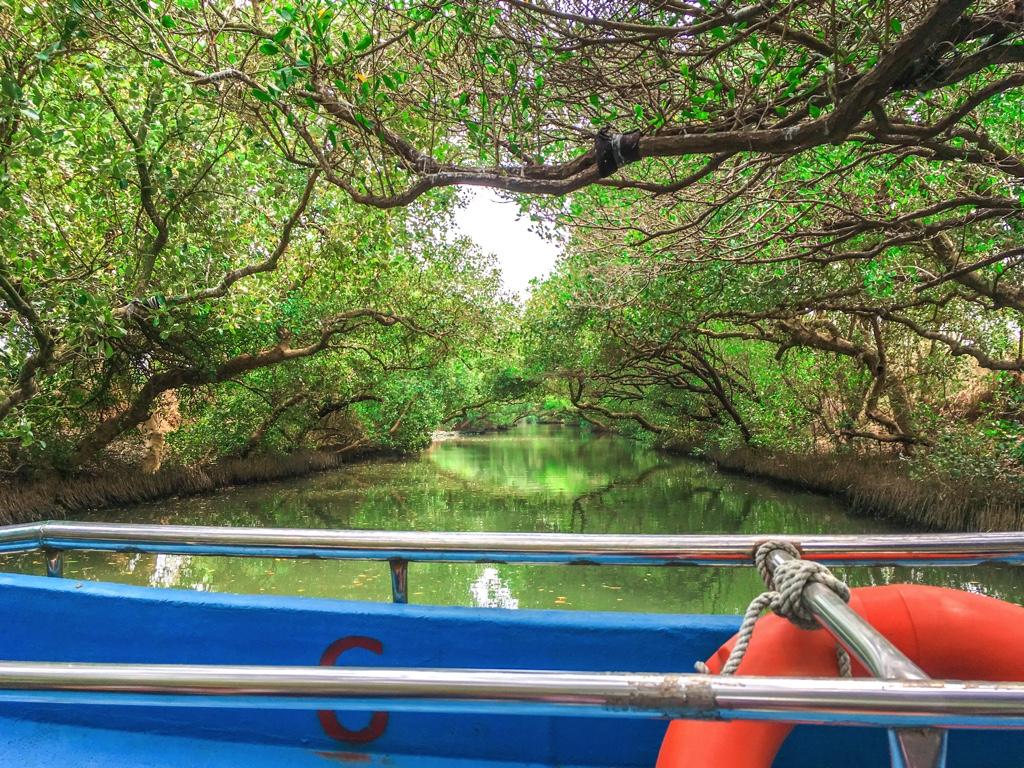 四草緑色隧道のクルージングで見られる風景
