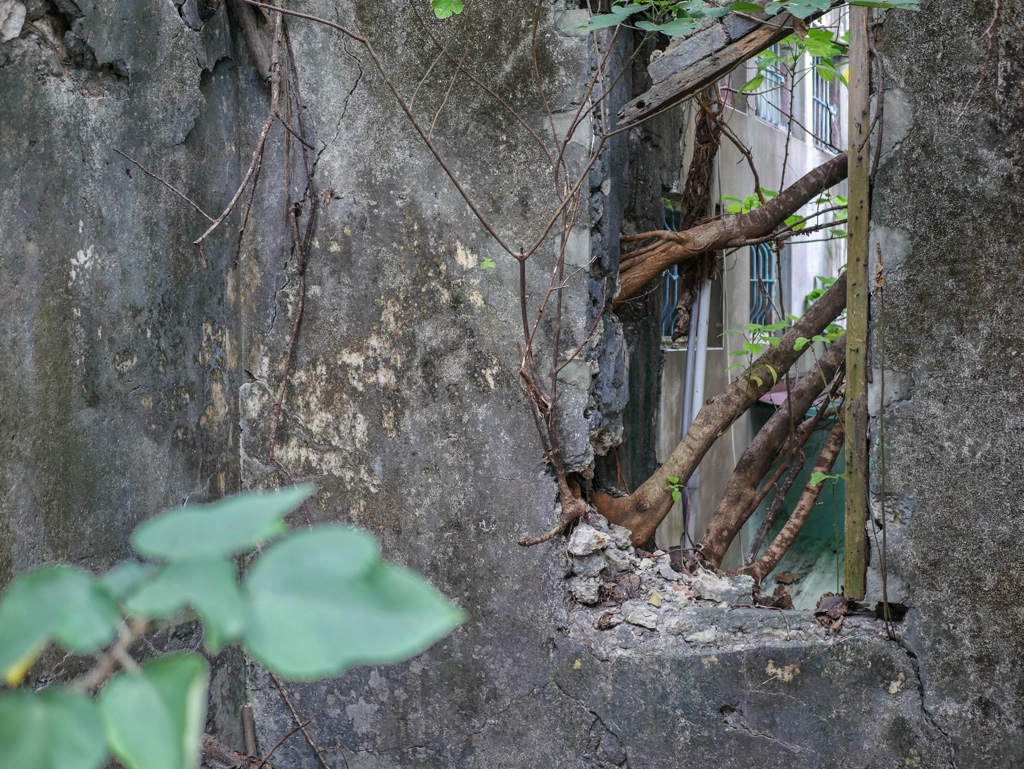 林園安樂樓の部屋の窓