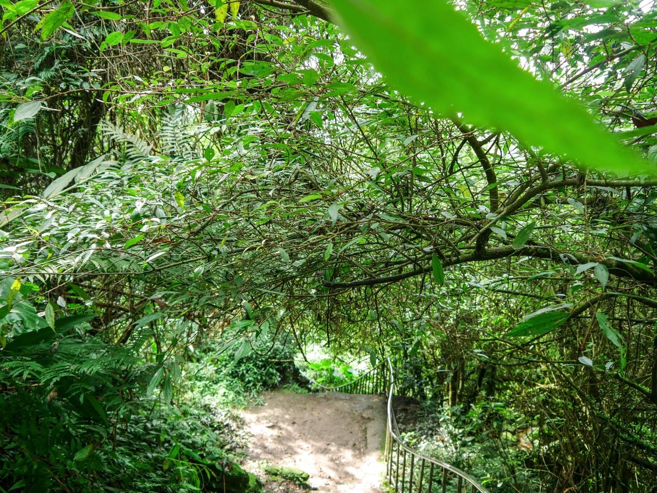 銀河洞越嶺歩道の緑に包まれた空間