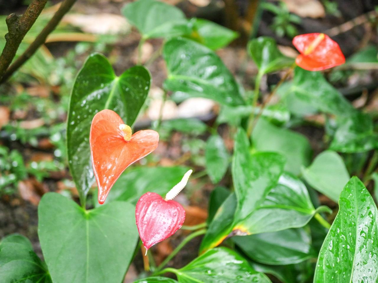 台湾の植物