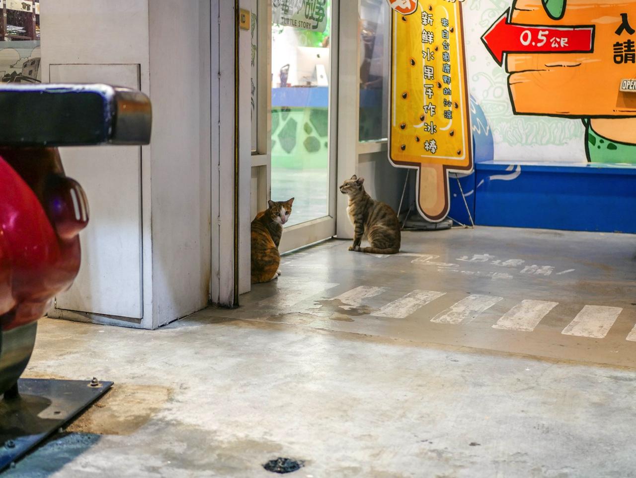 小琉球の野良猫