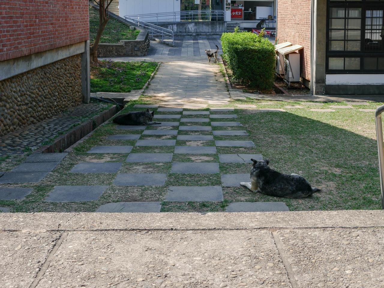 日陰で休憩中の犬